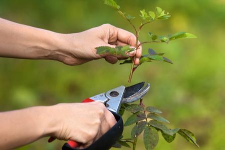 pruning,priorities,discipleship,mission,habits